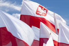 Multiple Polish Flags Flying Against the Sky Royalty Free Stock Photography