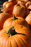 Multiple Pumpkins With Twisted Stems Stock Photography