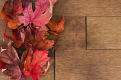 Multiple Red Maple Leafs on Maple Flooring. Bright red Canadian Maple Leafs sit on top of dark Maple hardwood flooring Stock Images