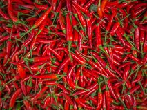 Multiple red spicy pepper background Stock Images