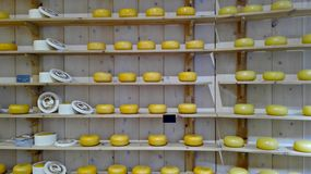 Multiple rows of wooden shelves with above shapes of tasty Dutch cheese royalty free stock photo