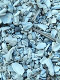 Multiple sea shells Stock Photography