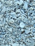 Multiple sea shells Royalty Free Stock Image