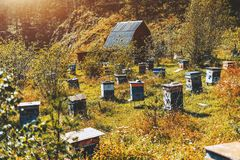 Lanscape with mountain grassland with bee-hives. Multiple small beehives on mountain meadow with wildflowers and native grasses on sunny autumn afternoon, house Royalty Free Stock Photos
