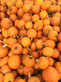 Multiple Small Pumpkins Royalty Free Stock Photography