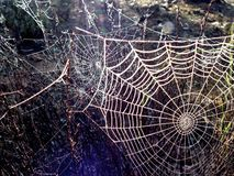 Multiple spider webs in bush Royalty Free Stock Images