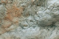 Spiral pattern in a tree. Multiple spiral patterns on the inside of a tree trunk stock images