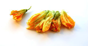 Multiple Squash Flowers Stock Photography