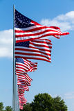 Multiple United States Flags. Flying on a holiday Stock Photography