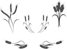 Multiple Wheat Illustrations. Multiple illustrations of wheat isolated on white background. Vector available Royalty Free Stock Photos