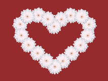 Multiple white daisy flower heart shape valentines day card red background Royalty Free Stock Image