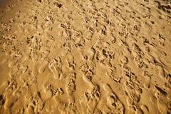 Multiplicidad de huellas en la arena fotografía de archivo libre de regalías