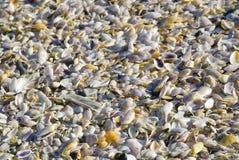 Multiplicidad de shelles fotos de archivo