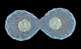Multiplying Cells. Stock Image
