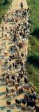 Multitud de cabras Fotos de archivo