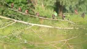 Multitud de diversos pájaros metrajes