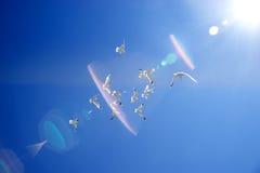 Multitud de gaviotas Imagen de archivo libre de regalías