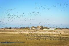 Paisaje con la casa y los pájaros imagen de archivo libre de regalías
