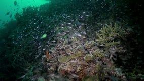 Multitud de la escuela de los pescados de cristal en el filón en la oscuridad almacen de video