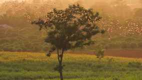 Multitud de la mosca del palo de fruta en el grupo que dirige en el bosque hacia la comida en la puesta del sol almacen de metraje de vídeo