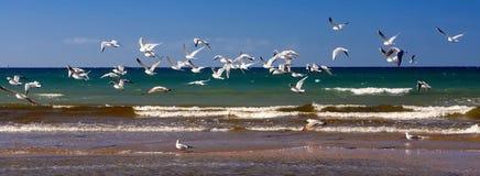 Multitud de las gaviotas que vuelan en la costa sobre la playa arenosa El paisaje escénico del verano de la playa con el cielo az fotos de archivo
