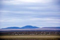 Multitud de las ovejas en el campo Foto de archivo libre de regalías