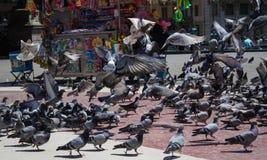 Multitud de las palomas para la comida en la ciudad foto de archivo libre de regalías