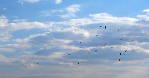 Multitud de los buitres africanos que circundan, fauna de Botswana África almacen de metraje de vídeo