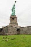 Multitud de los gansos de Canadá cerca de la estatua de la libertad, Liberty Island Imágenes de archivo libres de regalías