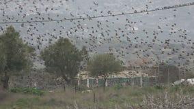 Multitud de los pájaros 1 almacen de metraje de vídeo