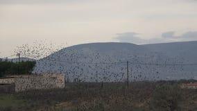 Multitud de los pájaros 3 almacen de metraje de vídeo