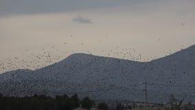 Multitud de los pájaros 4 metrajes