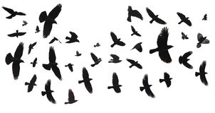 Multitud de los pájaros aislados imagenes de archivo