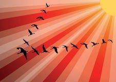 Multitud de los pájaros de la grúa contra puesta del sol. ilustración del vector