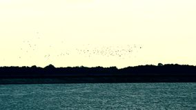 Multitud de los pájaros de vuelo por encima de la superficie del lago, del río o del puerto almacen de video