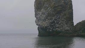 Multitud de los pájaros de mar que vuelan sobre el agua y que se sientan en jerarquía en el acantilado rocoso en agua de mar metrajes