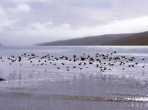 Multitud de los pájaros por encima de la superficie Foto de archivo libre de regalías