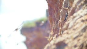 Multitud de los pájaros que vuelan sobre el acantilado en día soleado almacen de video