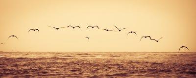 Multitud de los pájaros que vuelan sobre el mar Fotos de archivo libres de regalías