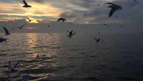 Multitud de los p?jaros de las gaviotas que vuelan en la c?mara lenta del cielo azul