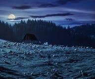 Multitud de ovejas en el prado cerca del bosque en montañas en la noche Foto de archivo