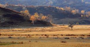 multitud de ovejas en Glassland en Inner Mongolia Foto de archivo