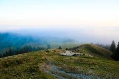 Multitud de ovejas encima de la montaña, paisaje de la mucha altitud Imagenes de archivo