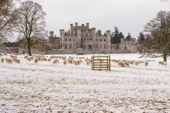 Multitud de ovejas fuera del castillo de Lowther Fotos de archivo