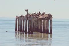 Multitud de pájaros Fotografía de archivo