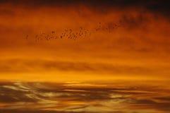 Multitud de pájaros Fotos de archivo libres de regalías