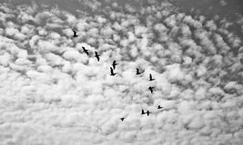 Multitud de pájaros Fotos de archivo