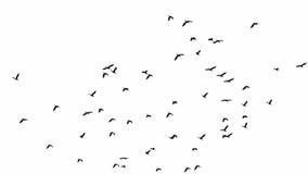 Multitud de pájaros imágenes de archivo libres de regalías