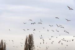Multitud de pájaros Foto de archivo libre de regalías
