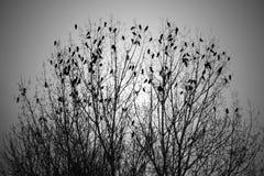 Multitud de pájaros en árbol Foto de archivo libre de regalías